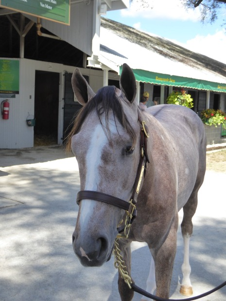 believe-you-can-2015-colt
